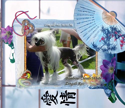 http://zingall-roz.ucoz.ru/_ld/2/297_Bambina_Cloudi_.jpg