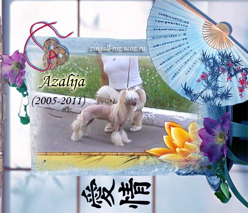 http://zingall-roz.ucoz.ru/_ld/3/300_Azalija__.jpg